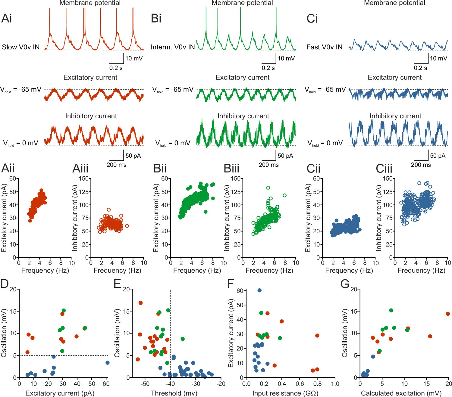 Functional diversity of excitatory commissural interneurons