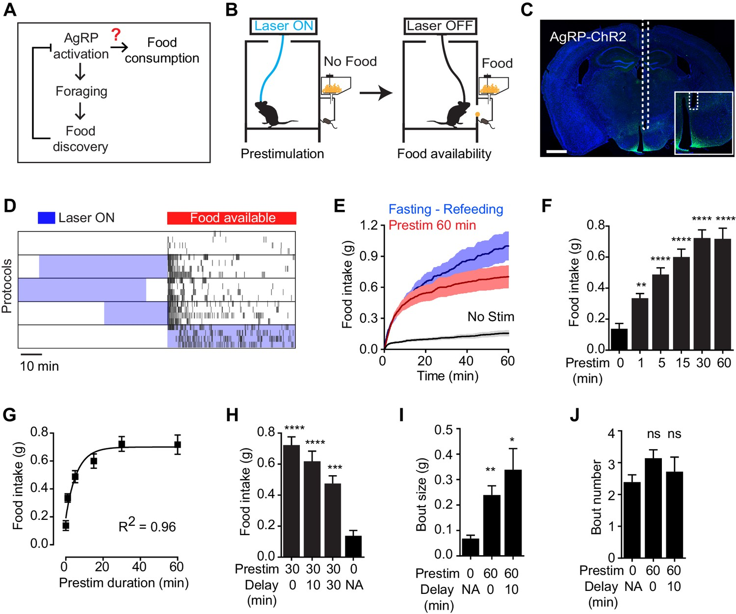 Hunger Neurons Drive Feeding Through A Sustained Positive Simple Circuit Diagram For Detecting Loss Of 4 20 Ma Signal Prestimulation Agrp Promotes Consummatory Behavior