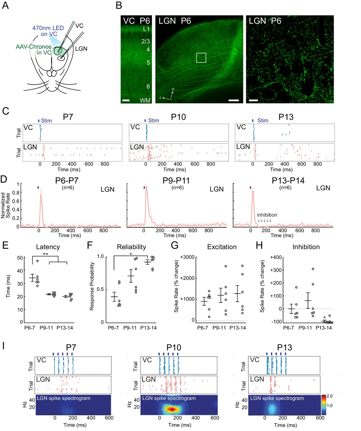 An Excitatory Cortical Feedback Loop Gates Retinal Wave Transmission Both Circuits Above Are Totally Unreliable And The Following Should Be Increasing Reliability Recruitment Of Inhibition Transforms Corticothalamic Function