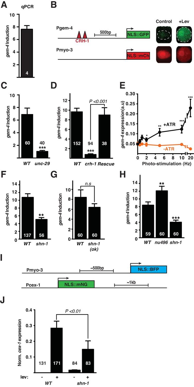 Shank is a dose-dependent regulator of Cav1 calcium current