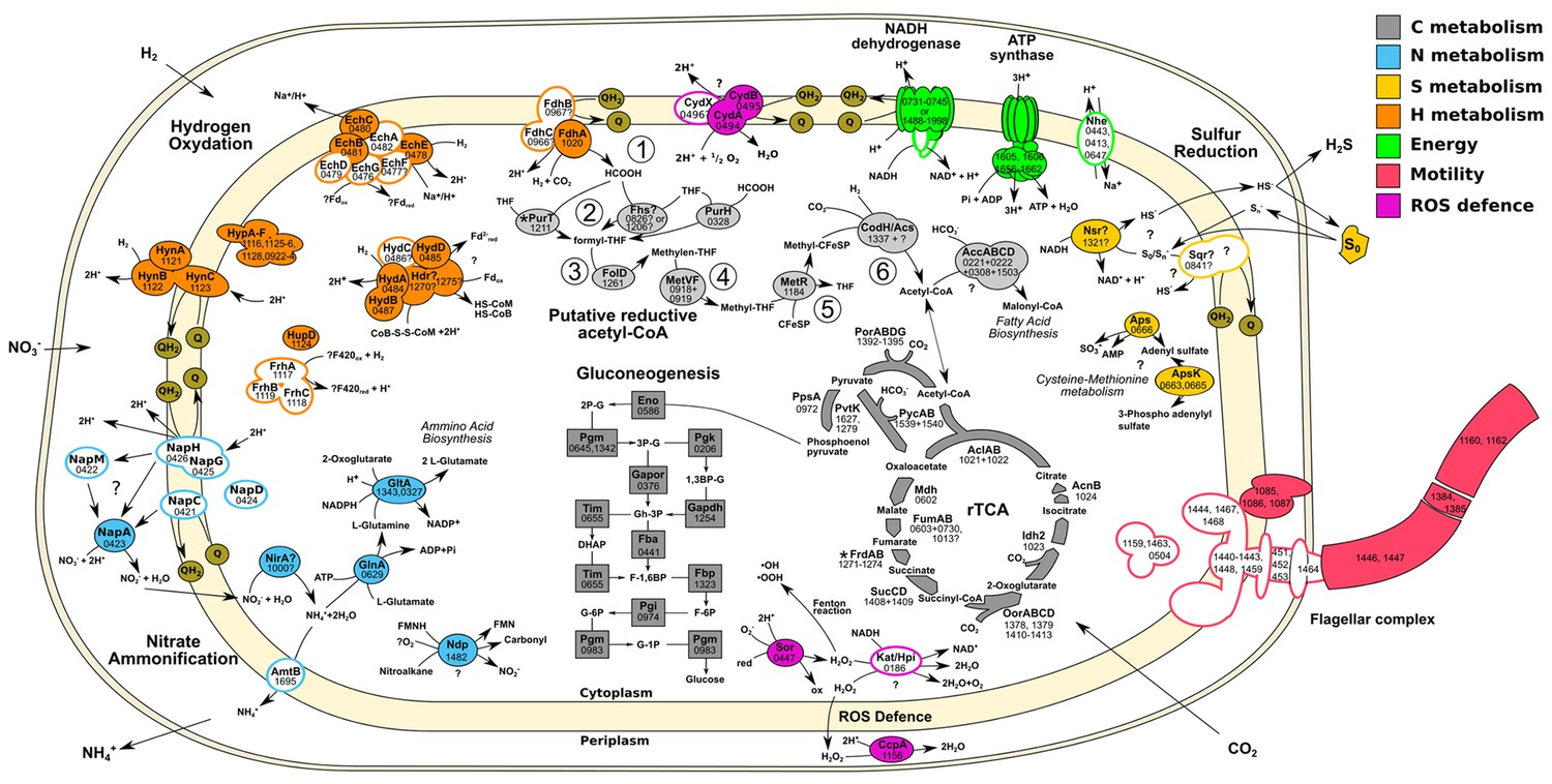 Insight into the evolution of microbial metabolism from the deep