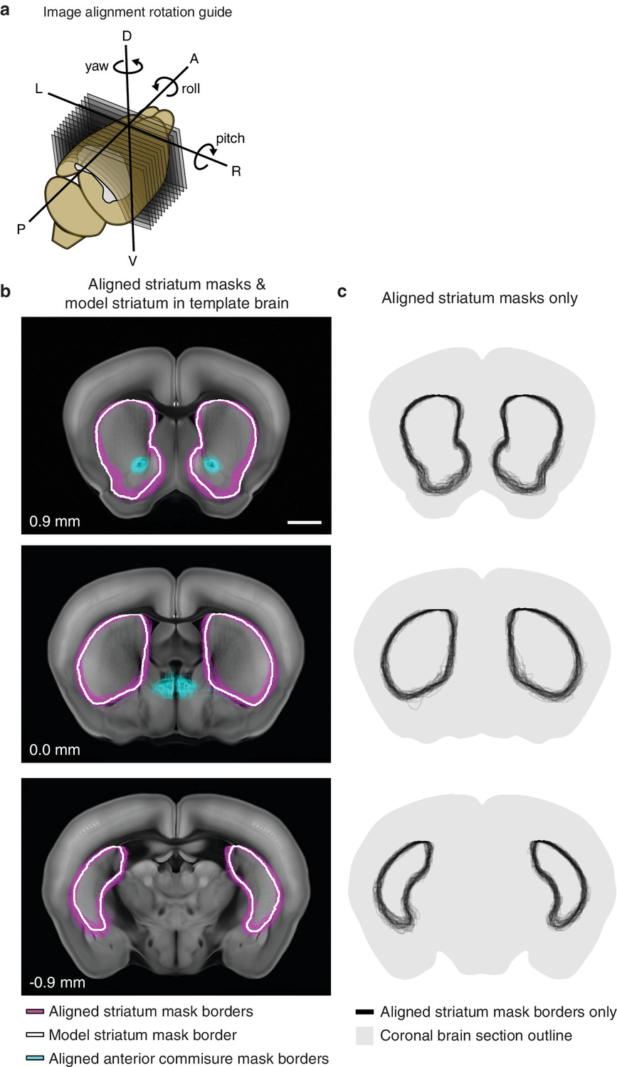 A Comprehensive Excitatory Input Map Of The Striatum Reveals Novel Small Outline Integrated Circuit Alignment For Thalamic Dataset