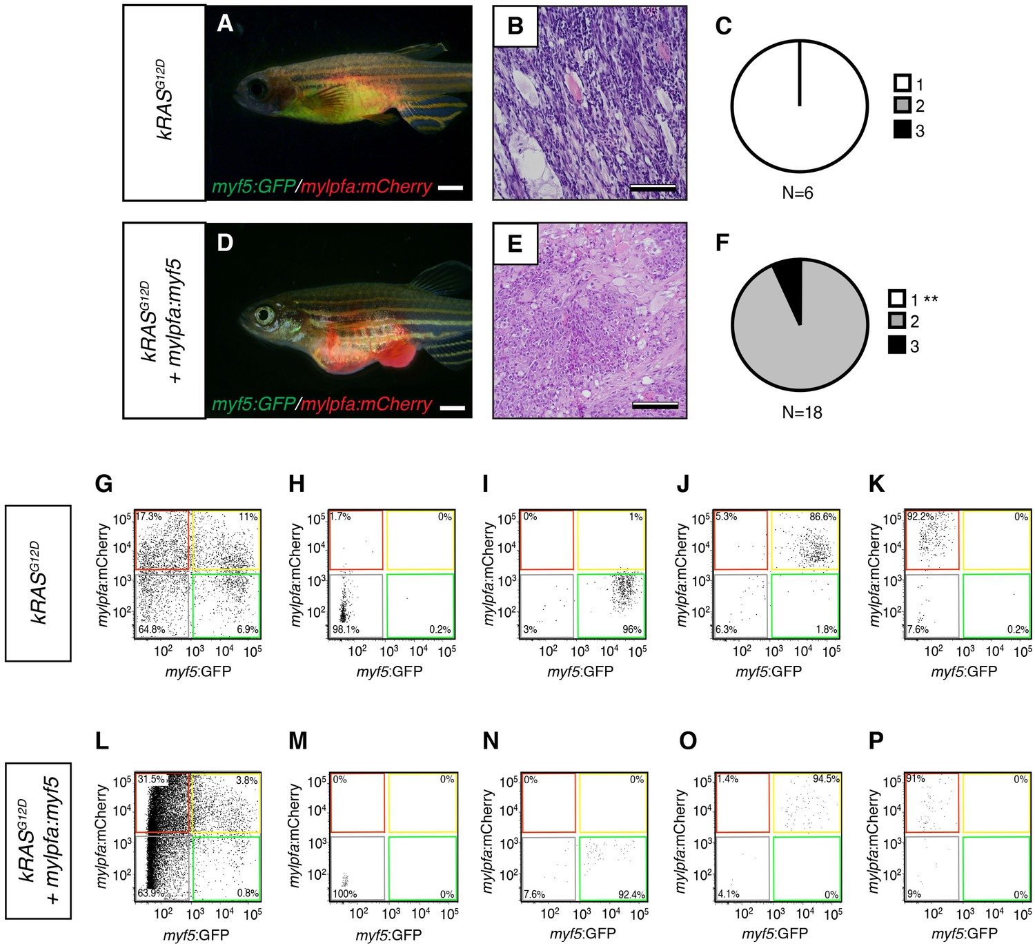 Myogenic regulatory transcription factors regulate growth in analysis of transplanted erms arising in cg1 strain syngeneic recpients fandeluxe Image collections