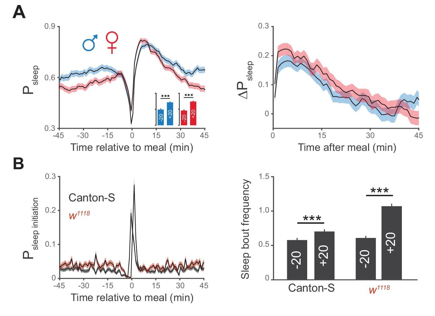 Postprandial Sleep Mechanics In Drosophila Elife
