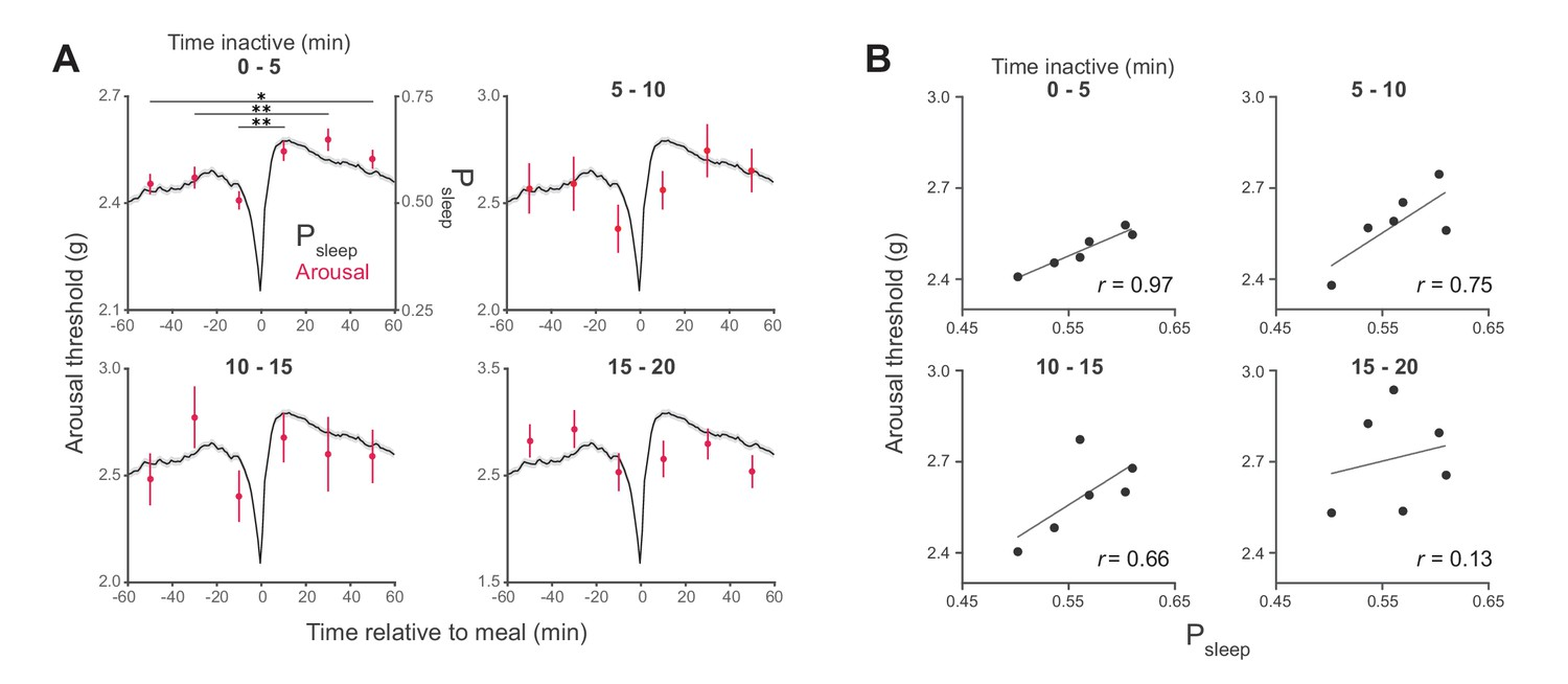 Arousal threshold surrounding meals with increasing sleep duration state.
