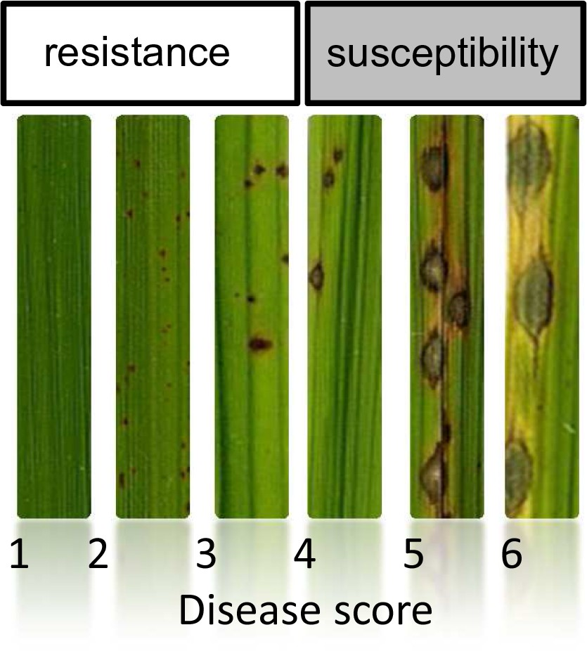 Pathogen effectors and plant immunity determine specialization of