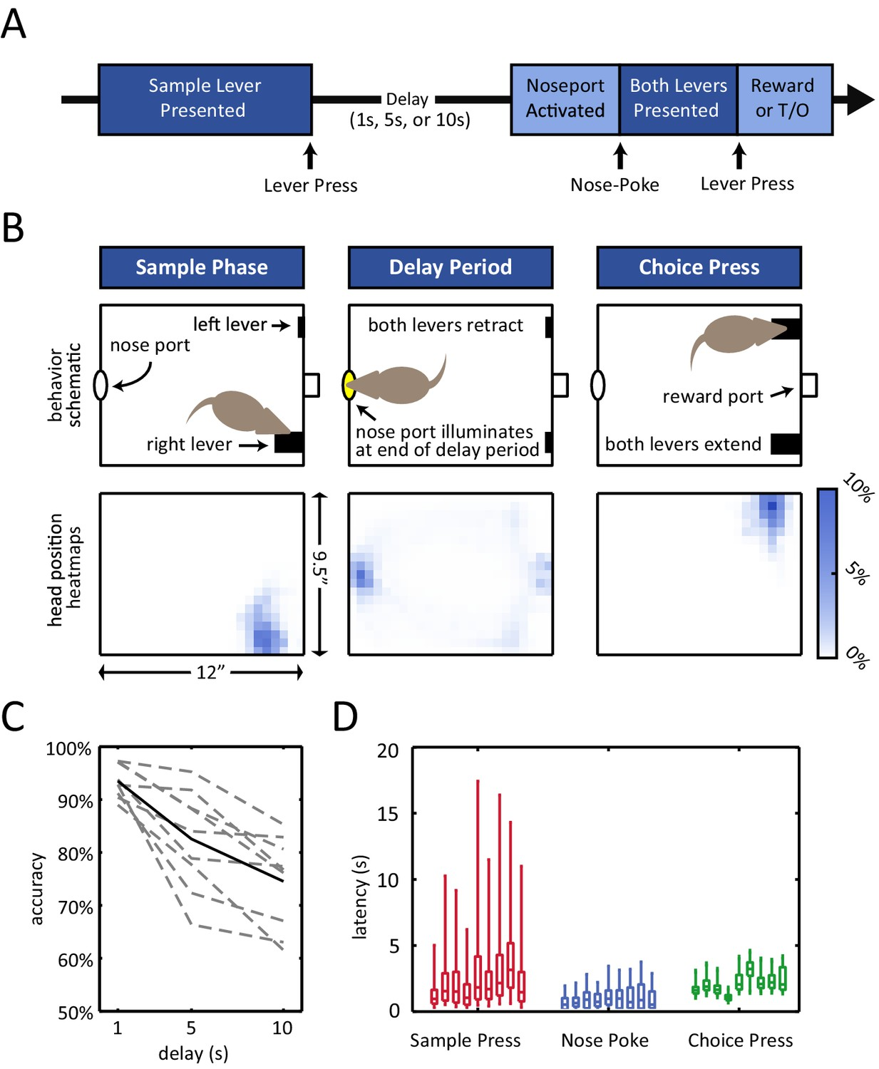 Dissociated Sequential Activity And Stimulus Encoding In The Time Delay Circuits Delayed Non Match To Position Dnmp Task