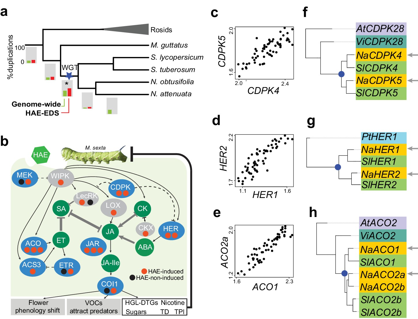 Evolution of herbivore-induced early defense signaling was shaped by
