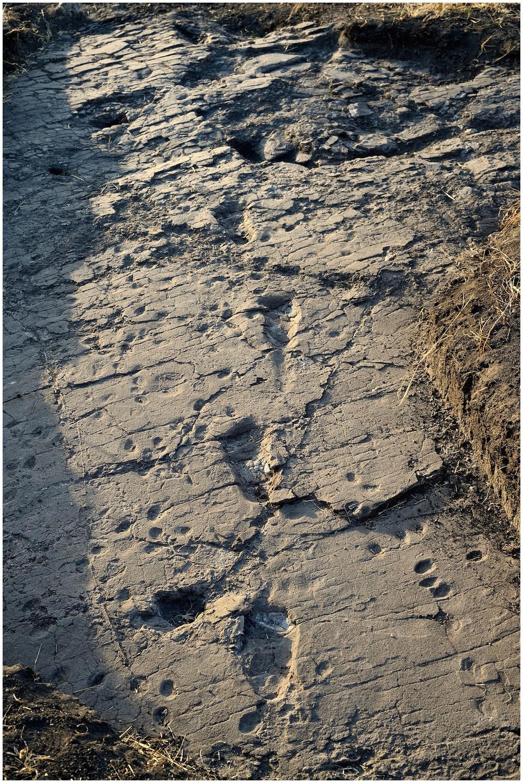 New Footprints From Laetoli Tanzania Provide Evidence For
