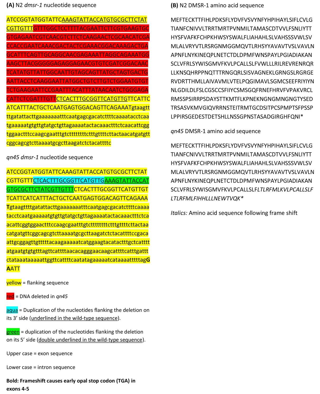 The RFamide receptor DMSR-1 regulates stress-induced sleep in C