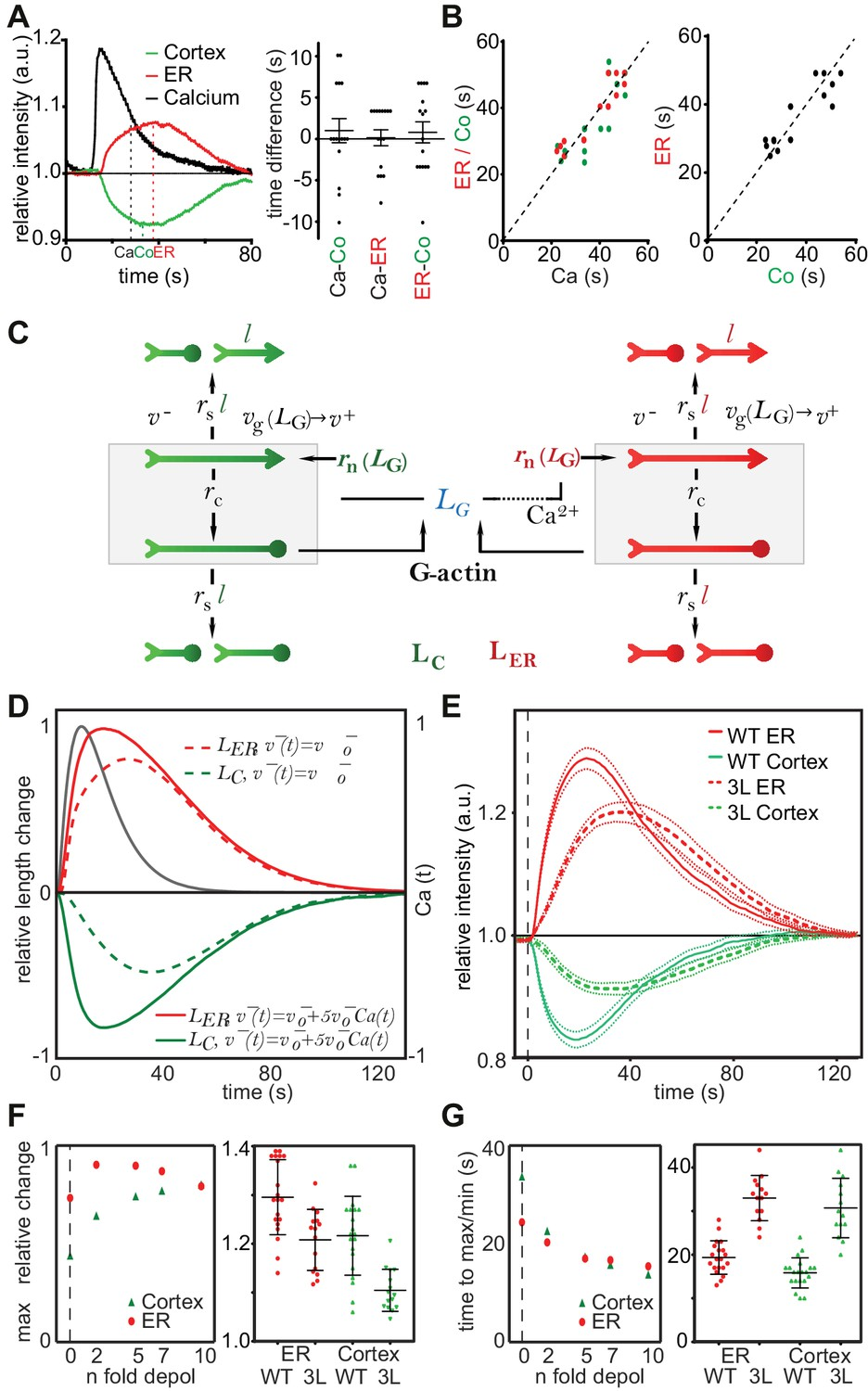 Calcium Mediated Actin Reset Caar Mediates Acute Cell Adaptations Cantilever Diagram Registration To Strength The Pdf A Stochastic Model Rationalizes Features And Kinetics