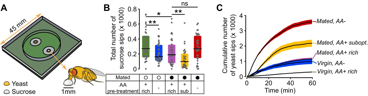 Internal states drive nutrient homeostasis by modulating