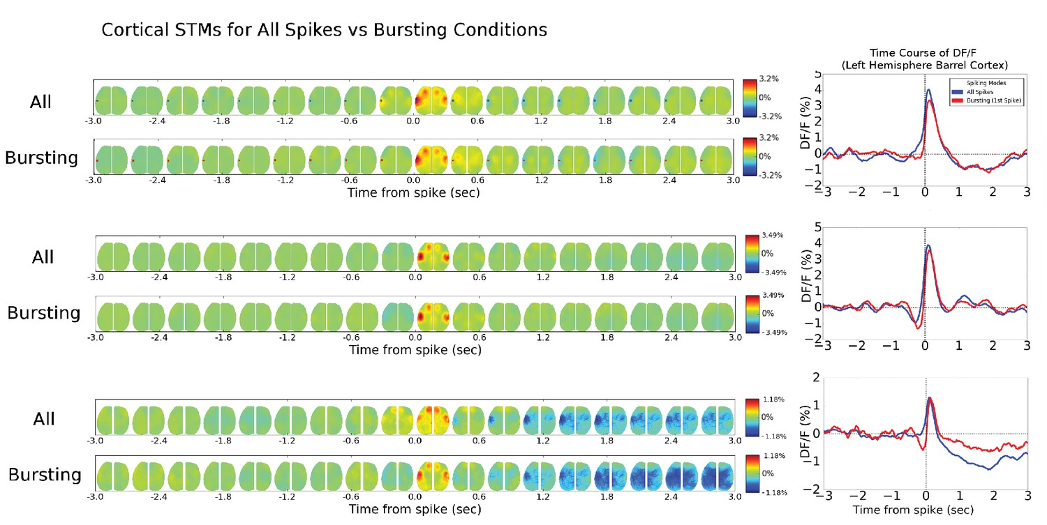 Mapping Cortical Mesoscopic Networks Of Single Spiking Or Touch Plate Wiring Diagram 6 Pl Cell Stm And Stmtds Are Similar Across Modes