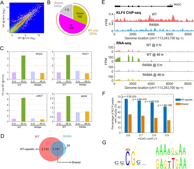 Methylated cis-regulatory elements mediate KLF4-dependent