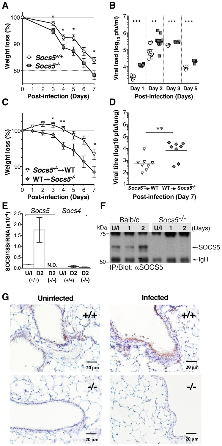 suppressor of cytokine signaling  socs 5 ameliorates
