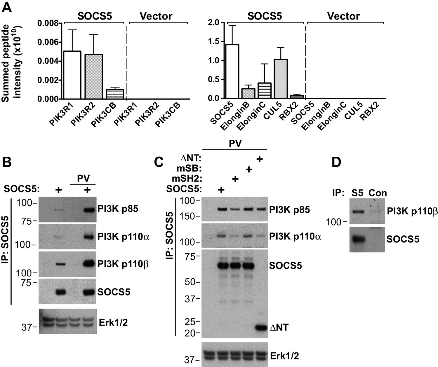 Suppressor Of Cytokine Signaling Socs5 Ameliorates Influenza Randall 102 Central Heating Timer Wiring Diagram Interacts With A Pi3k Complex