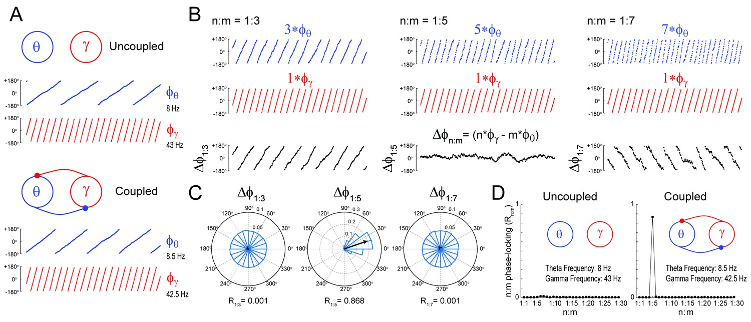 On cross-frequency phase-phase coupling between theta and gamma