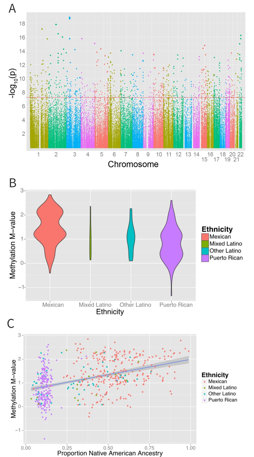 Differential methylation between ethnic sub-groups reflects