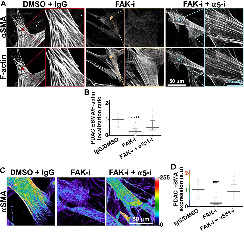 Matrix-regulated integrin αvβ5 maintains α5β1-dependent