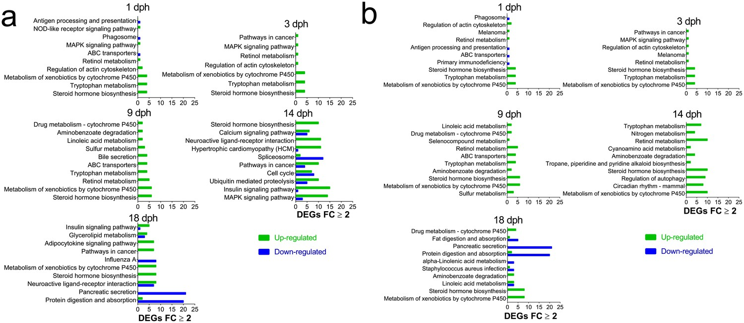 Novel Adverse Outcome Pathways Revealed By Chemical Genetics In A