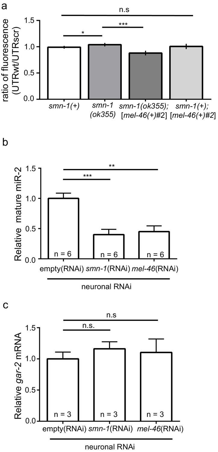 Decreased Microrna Levels Lead To Deleterious Increases In Neuronal Ibanez V1 Wiring Diagram Smn 1 Loss Of Function Abrogated Mir 2 Repression Gar Expression