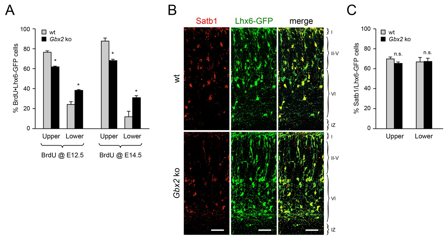 Thalamo Cortical Axons Regulate The Radial Dispersion Of Neocortical Weston Ct Wiring Diagram Lack Tcas In Gbx2 Mutant Mice Affects Laminar Distribution Different Classes Mge Derived Interneurons To A Similar Extent