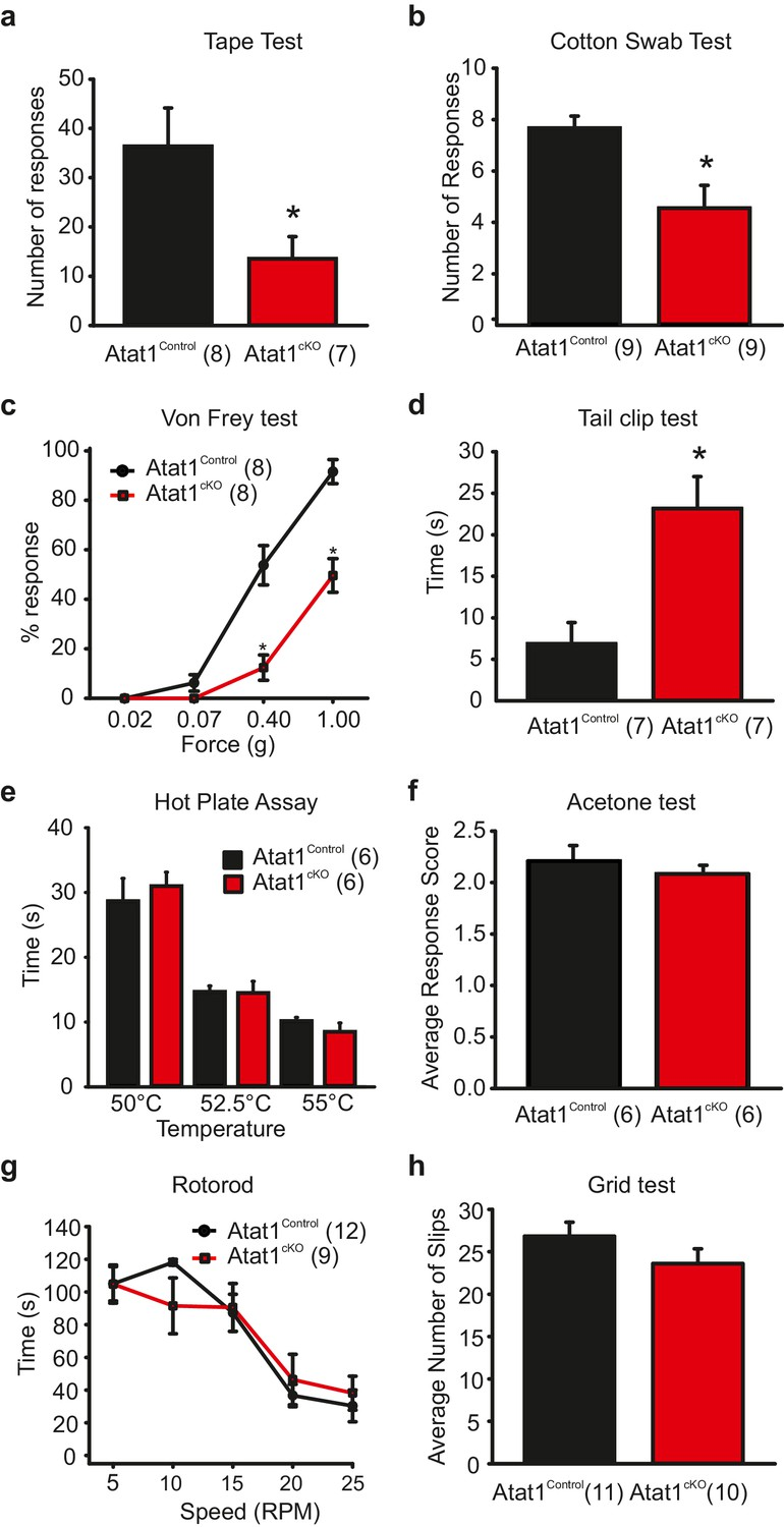 Acetylated Tubulin Is Essential For Touch Sensation In Mice Elife Ricerche Correlate A 4 Channel Amplifier Wiring Diagram Behavioural Analysis Of Atat1ckomice