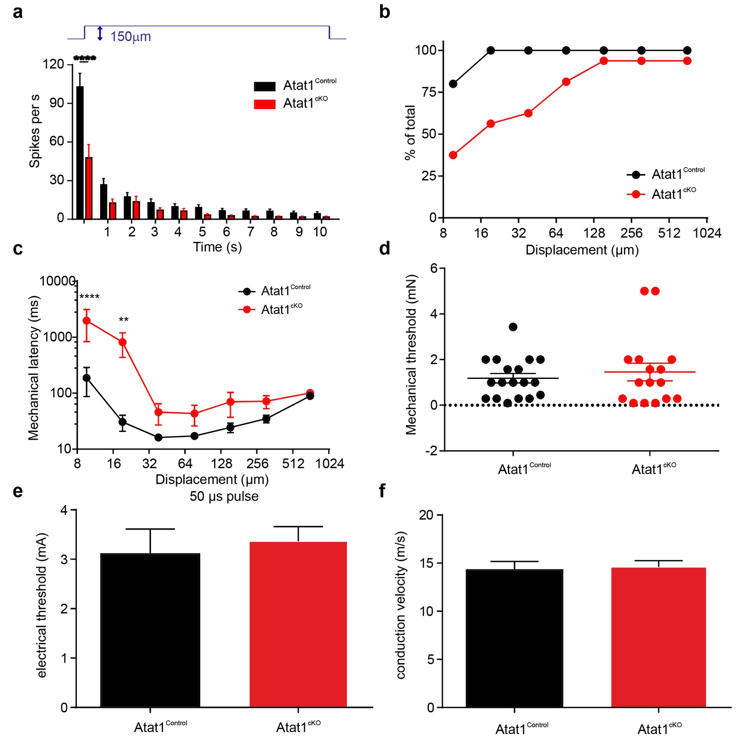 Acetylated tubulin is essential for touch sensation in mice