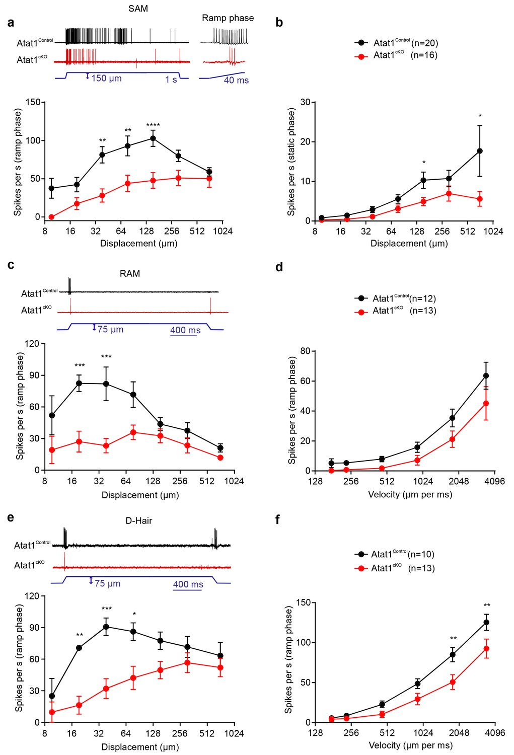 Acetylated Tubulin Is Essential For Touch Sensation In Mice Elife Backflow Preventer Diagram Car Tuning Tat1 Required Mechanosensitivity Of Low Threshold Mechanoreceptors