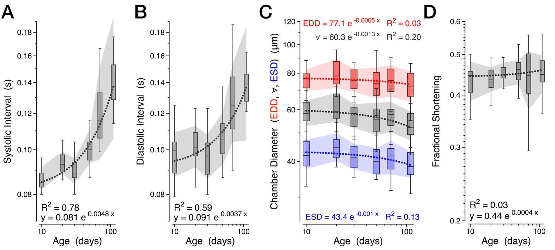 Age Dependent Diastolic Heart Failure In An Vivo Drosophila Model 515b Sarasota Loop Wiring Diagram Further Measures Of Normal Aging