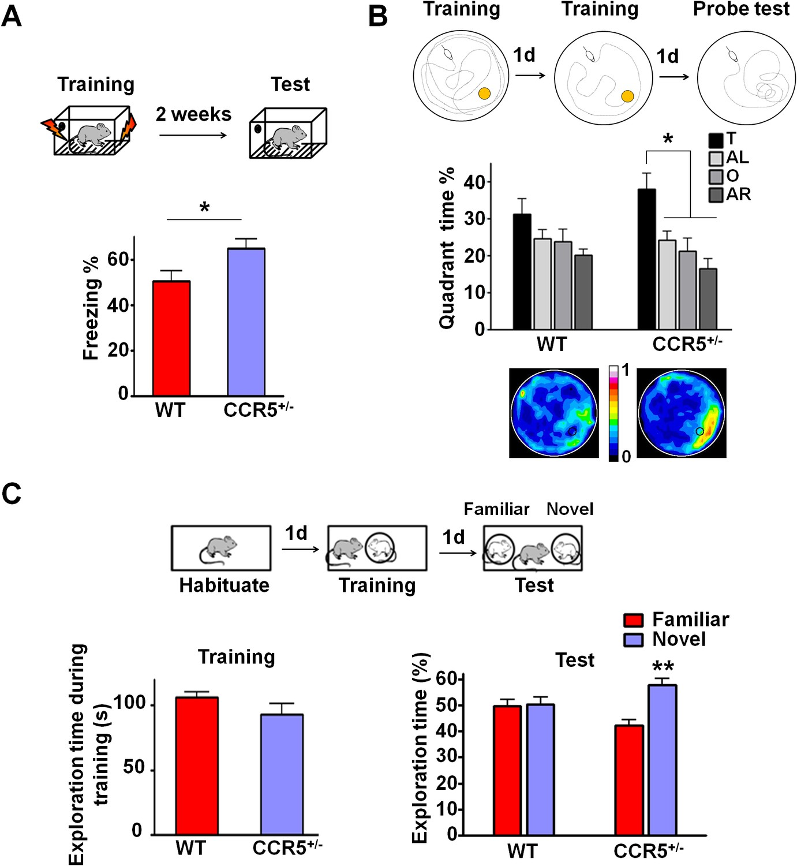 Study Shows Memory Gene Acts Like Virus: New Hope for Alzheimer's, HIV