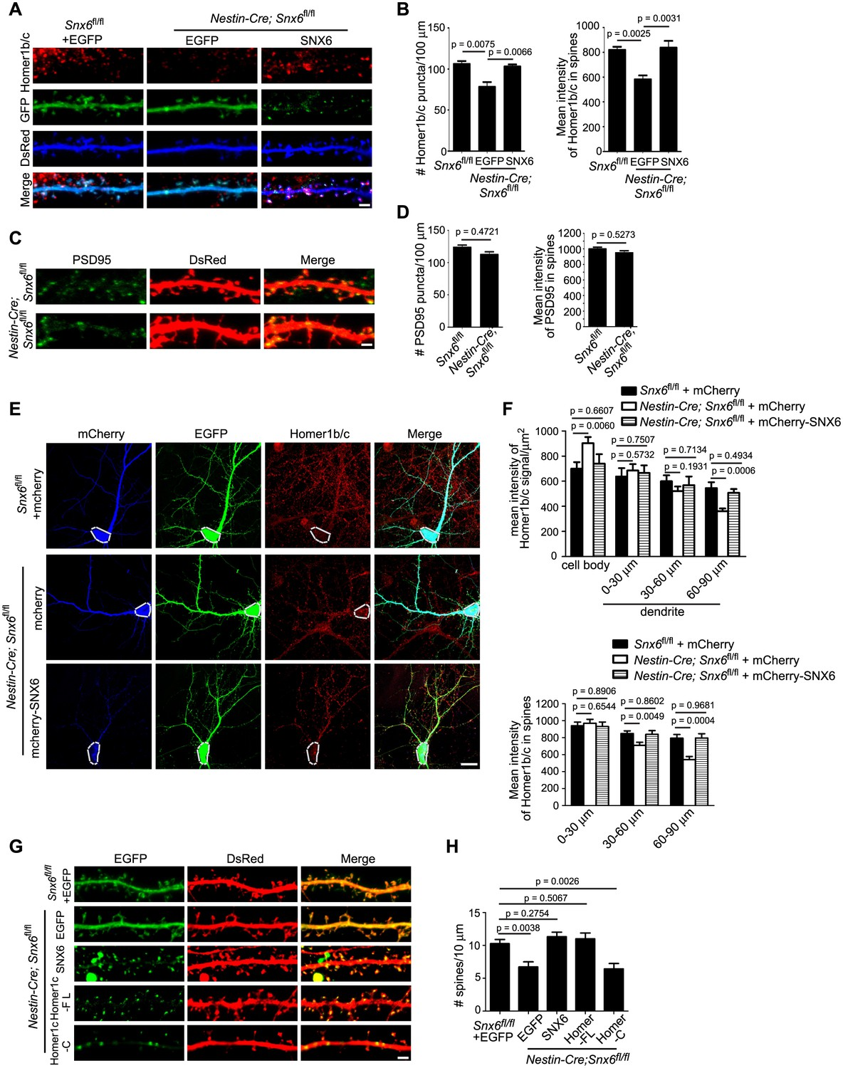 Ablation Of Snx6 Leads To Defects In Synaptic Function Ca1 Panel Lint Filter 04controls Top 05motor 06wiring Diagram Partial Loss Homer1b C From Distal Dendrites Neurons