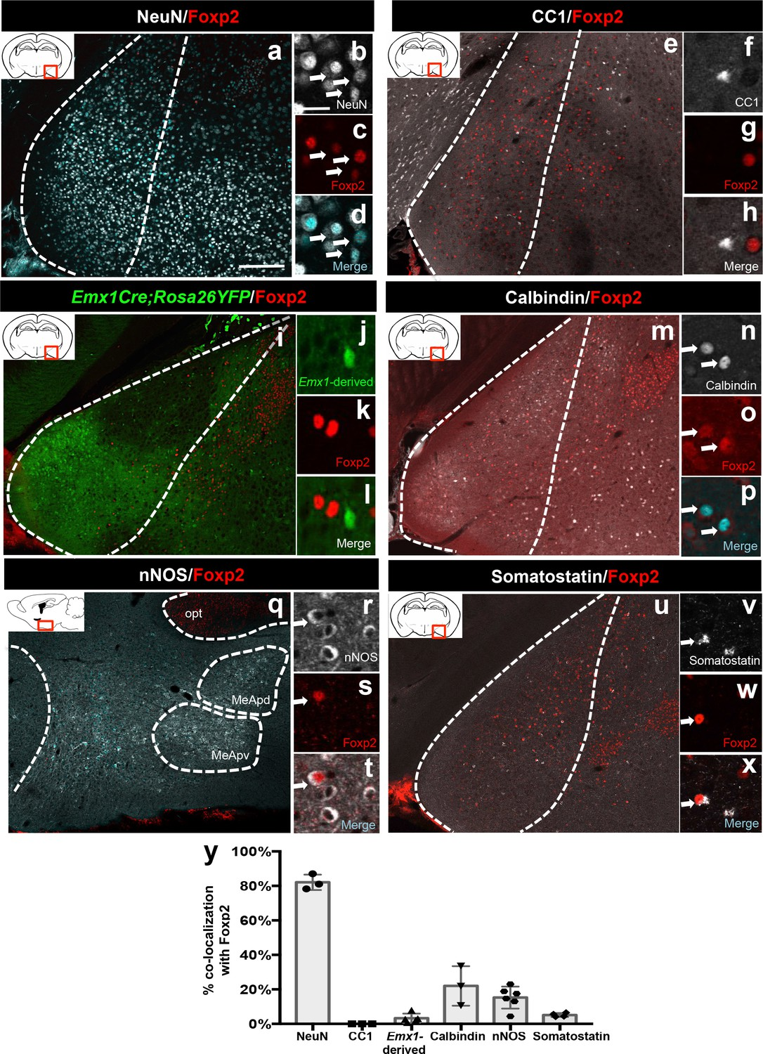 Embryonic transcription factor expression in mice predicts ...