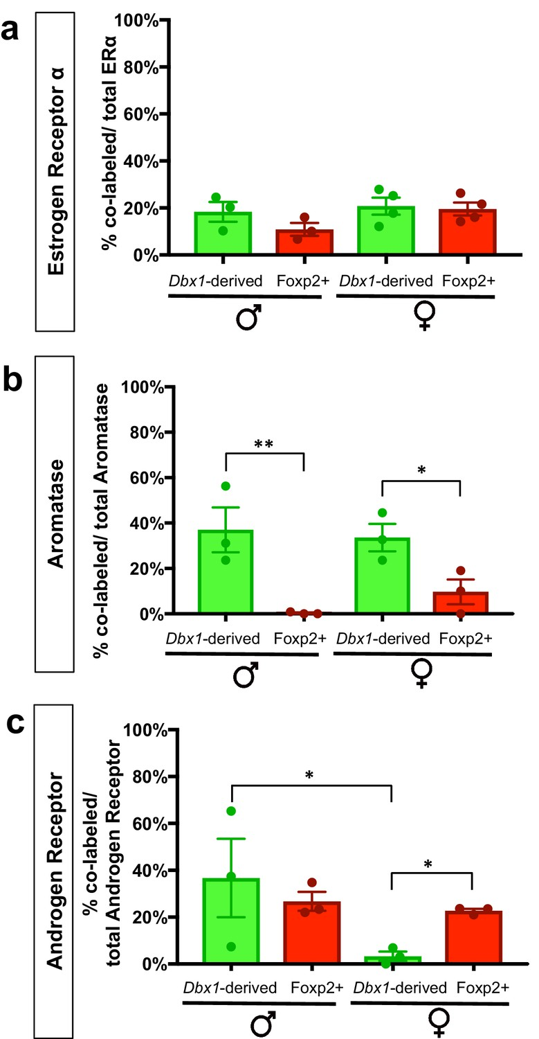 Embryonic Transcription Factor Expression In Mice Predicts Medial Jackson Rr Wiring Diagram Percent Contribution Of Dbx1 Derived And Foxp2 Cells To Sex Steroid Hormone Marker Populations