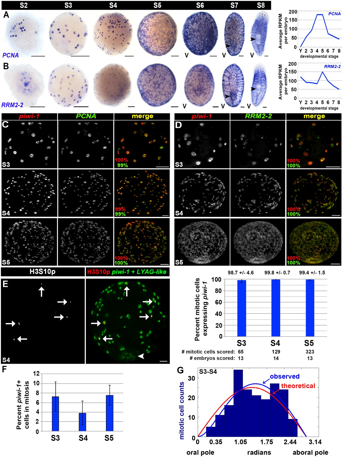 Embryonic origin of adult stem cells required for tissue homeostasis