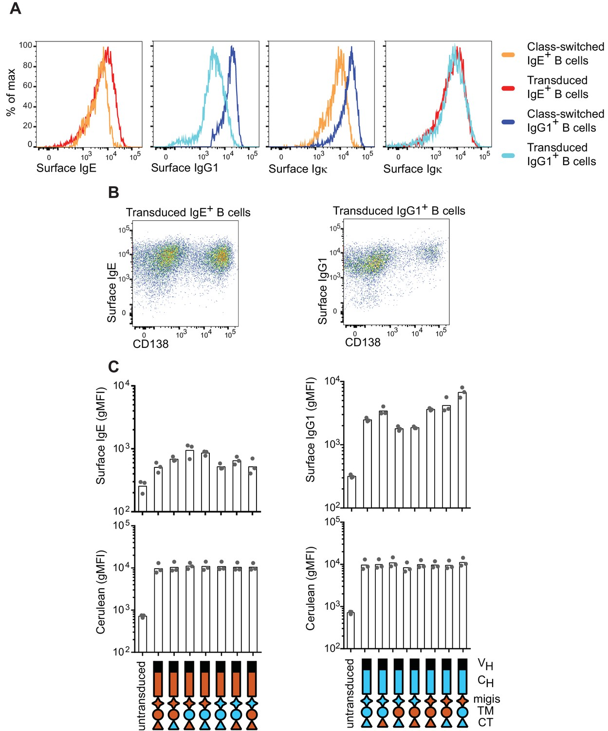 Regulation Of B Cell Fate By Chronic Activity The Ige Home Gt Switches Progressive Toggle Switch Surface Expression Bcrs On Naturally Class Switched Versus Transduced Primary Cells