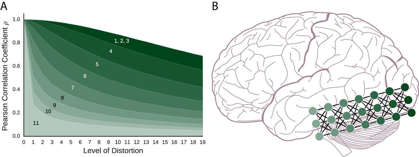 Neuronal Barcodes Shape Complex Networks In The Brain >> What The Success Of Brain Imaging Implies About The Neural Code Elife