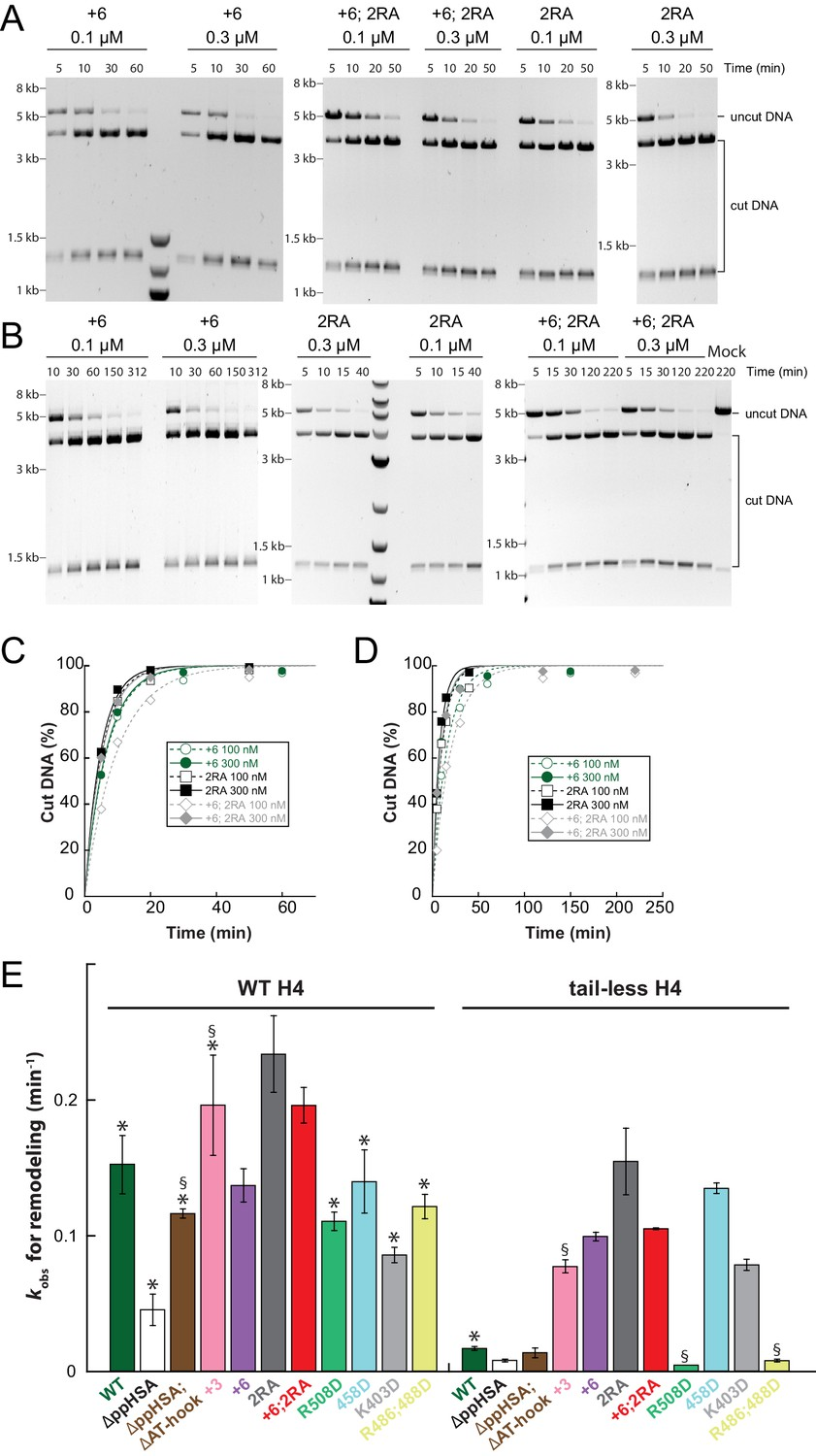 Concerted Regulation Of Iswi By An Autoinhibitory Domain And The H4 120 Force Engine Diagram Raw Data Remodeling Assays