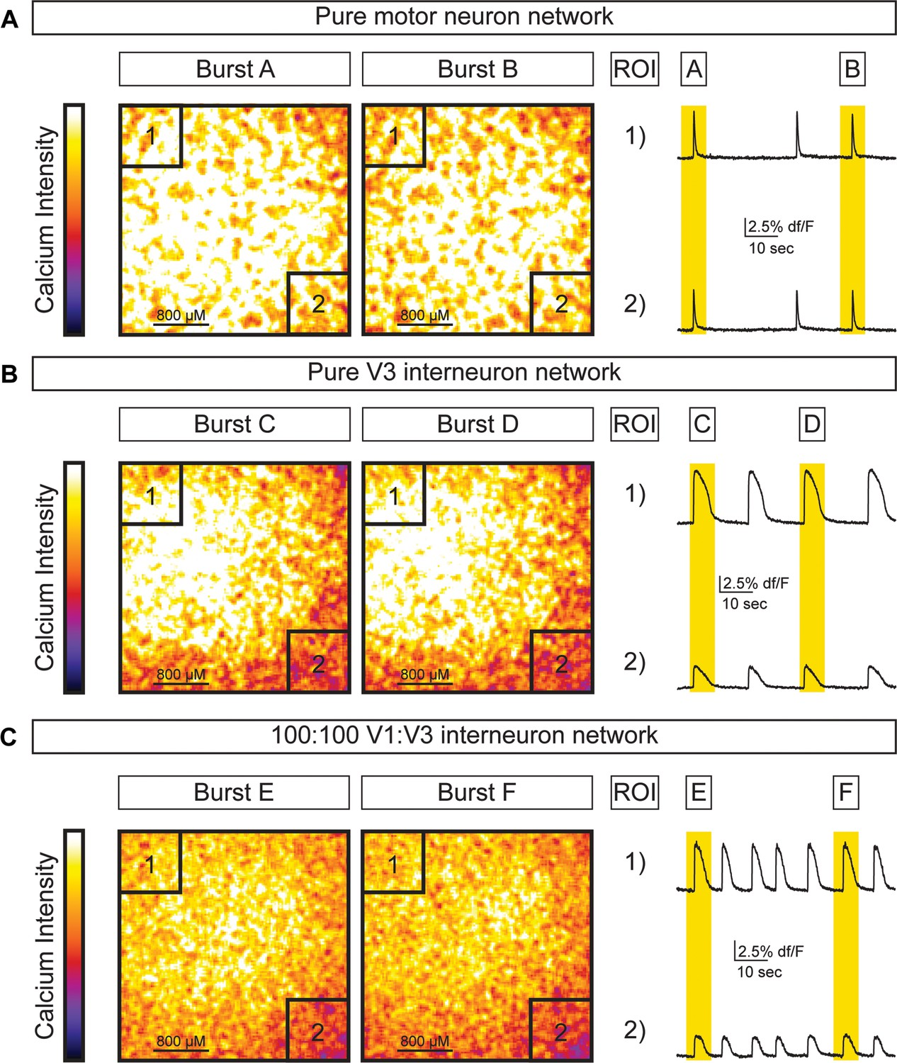Speed and segmentation control mechanisms characterized in