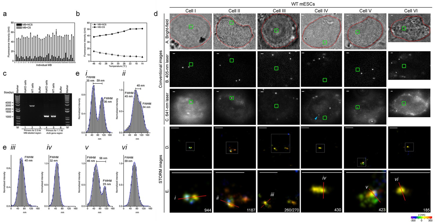 Super-resolution imaging of a 2 5 kb non-repetitive DNA in