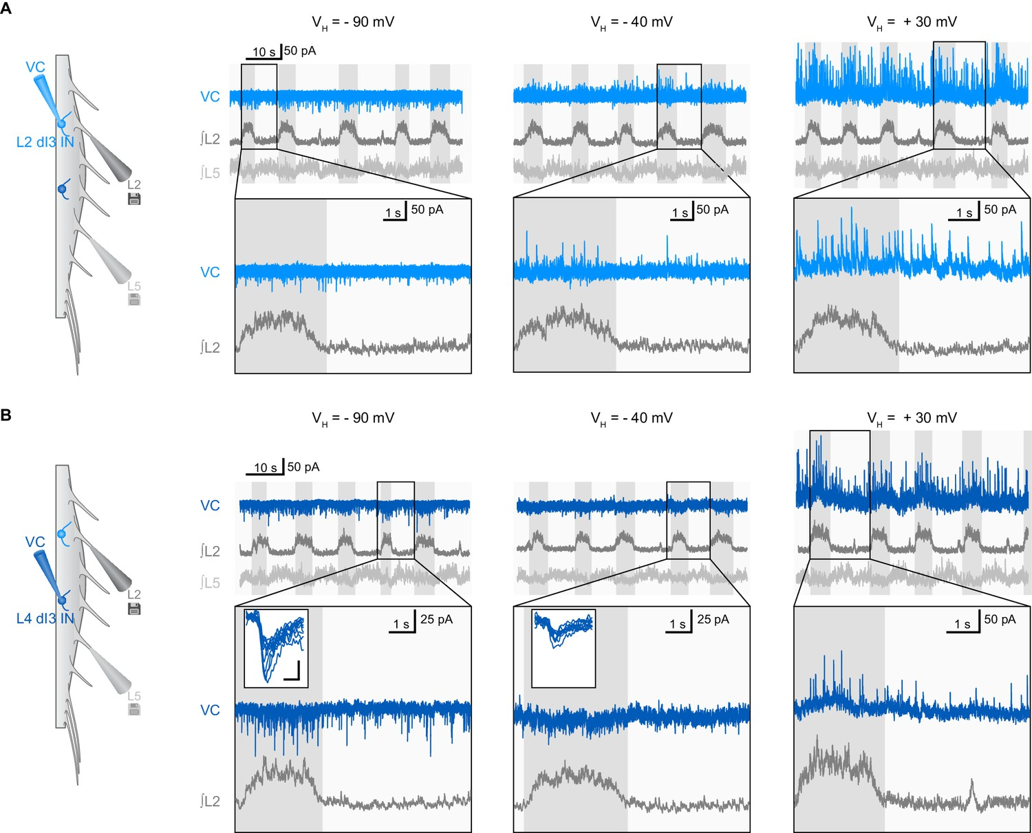 Spinal Microcircuits Comprising Di3 Interneurons Are Necessary For Suzuki Gn 125 Electric Circet Pdf Examples Of Synaptic Inputs To Ins During Fictive Locomotion