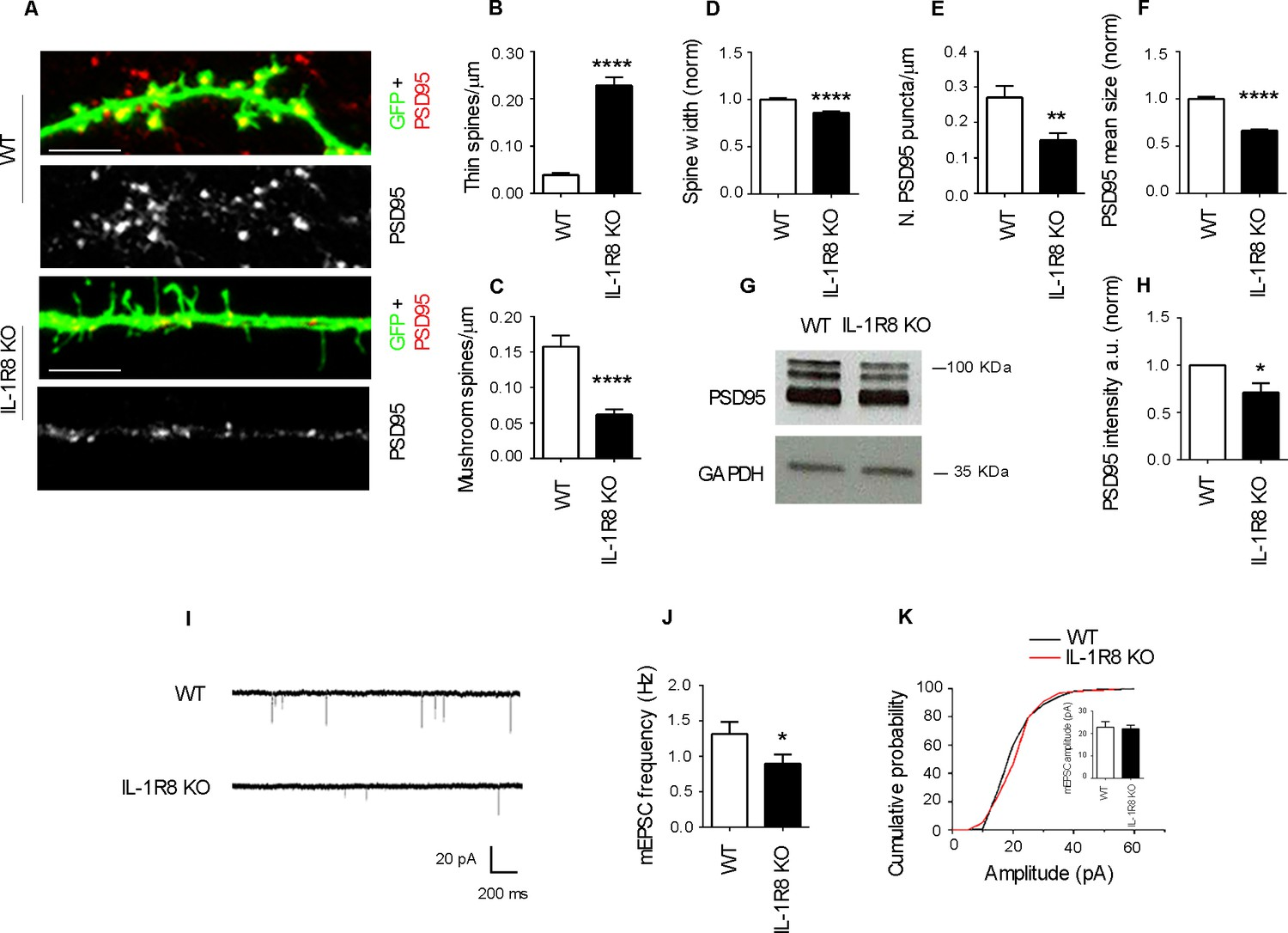Lack Of Il 1r8 In Neurons Causes Hyperactivation 1 Receptor Fm Transmitter Block Diagram Eee Community Silencing Affects Spine Morphology And Function