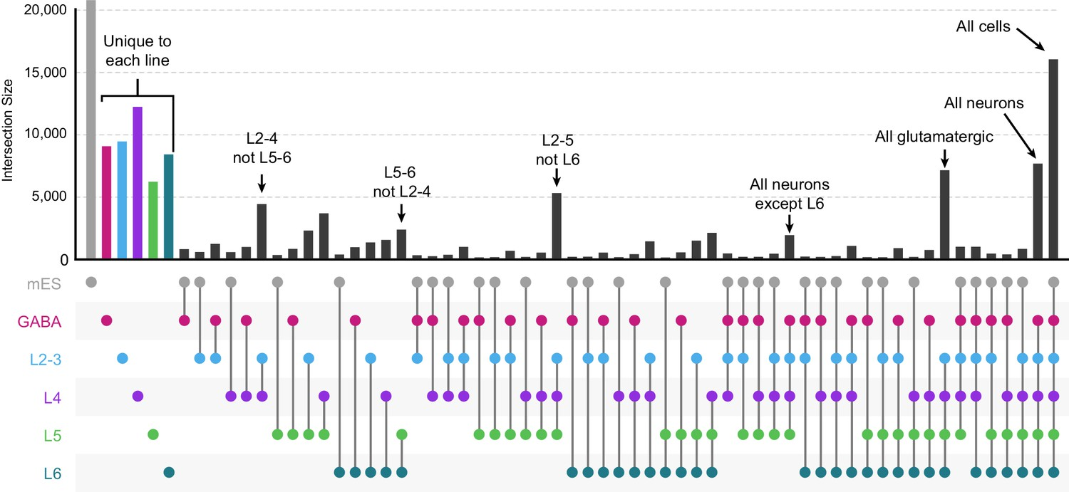 Layer-specific chromatin accessibility landscapes reveal
