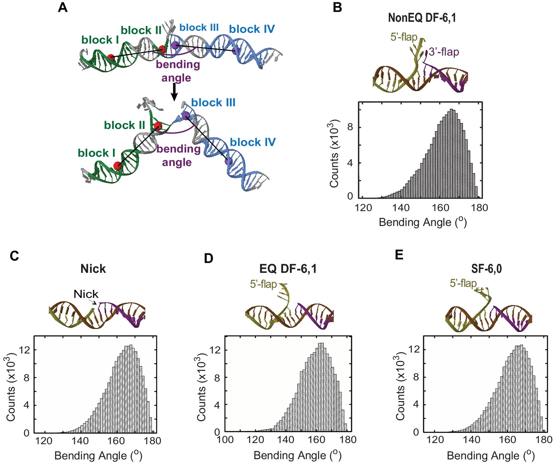 Single-molecule FRET unveils induced-fit mechanism for
