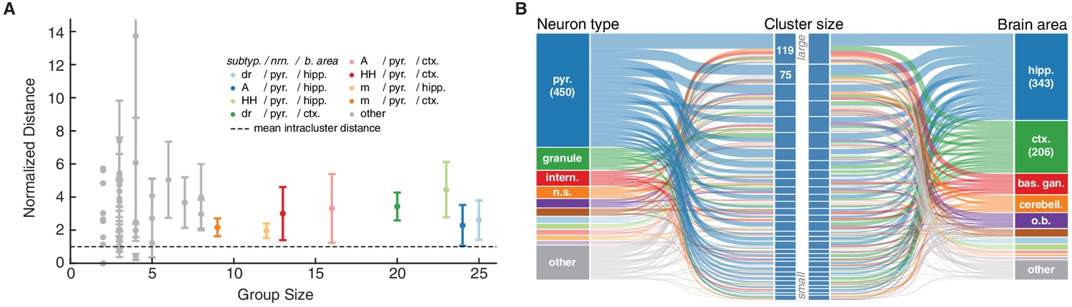 Ion Channel Model Groups Defined By Common Subtype Neuron Type And Brain Area Show Variability In Behavior