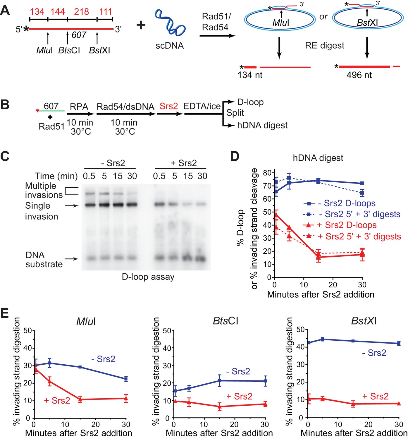 Srs2 promotes synthesis-dependent strand annealing by