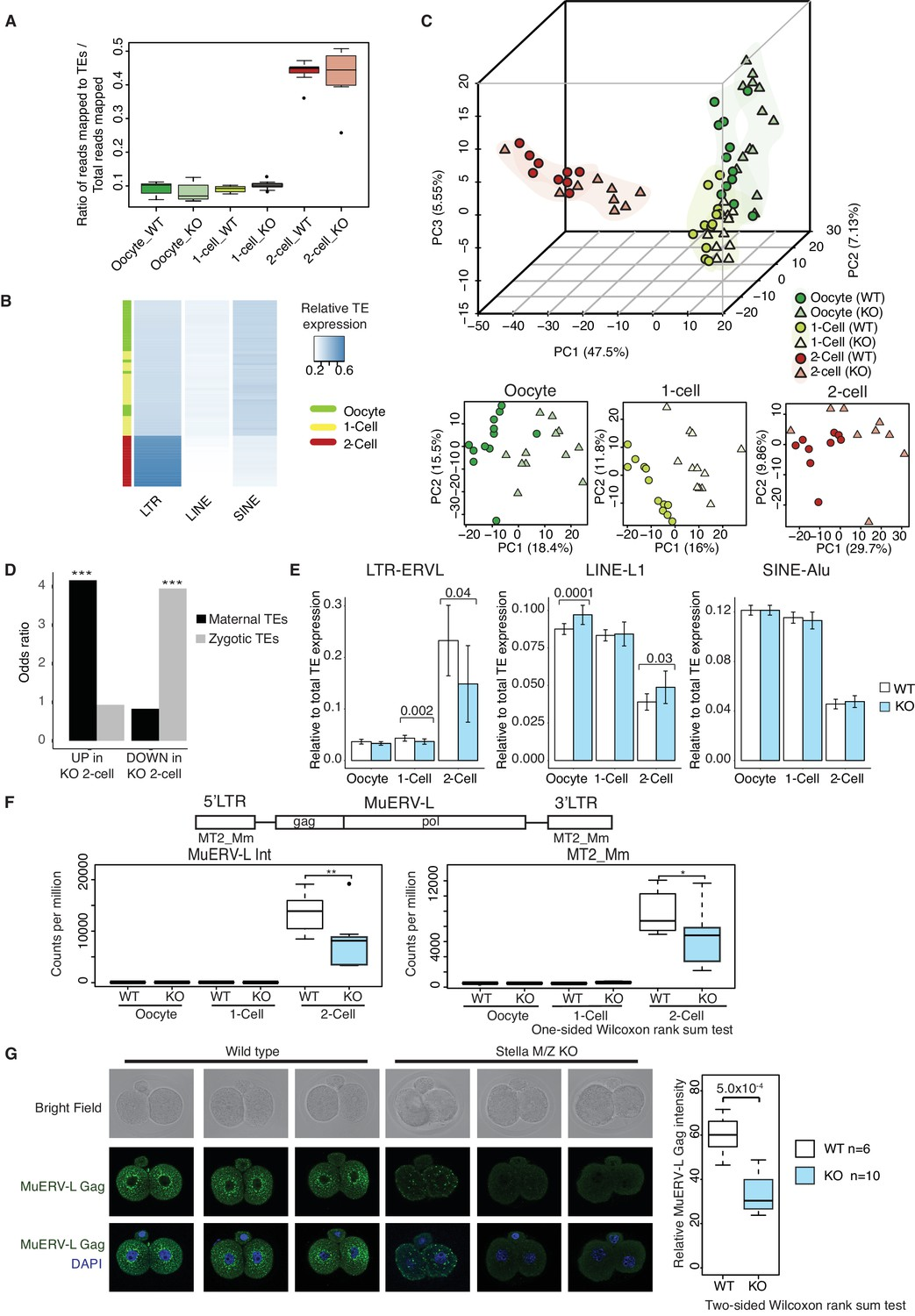 Stella modulates transcriptional and endogenous retrovirus tes are mis expressed in the absence of stella ccuart Gallery