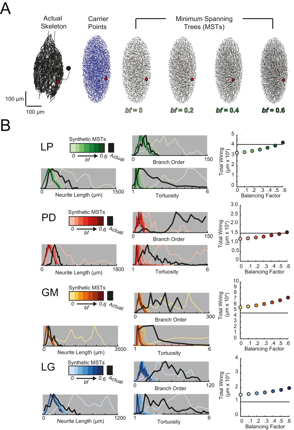 Sloppy morphological tuning in identified neurons of the