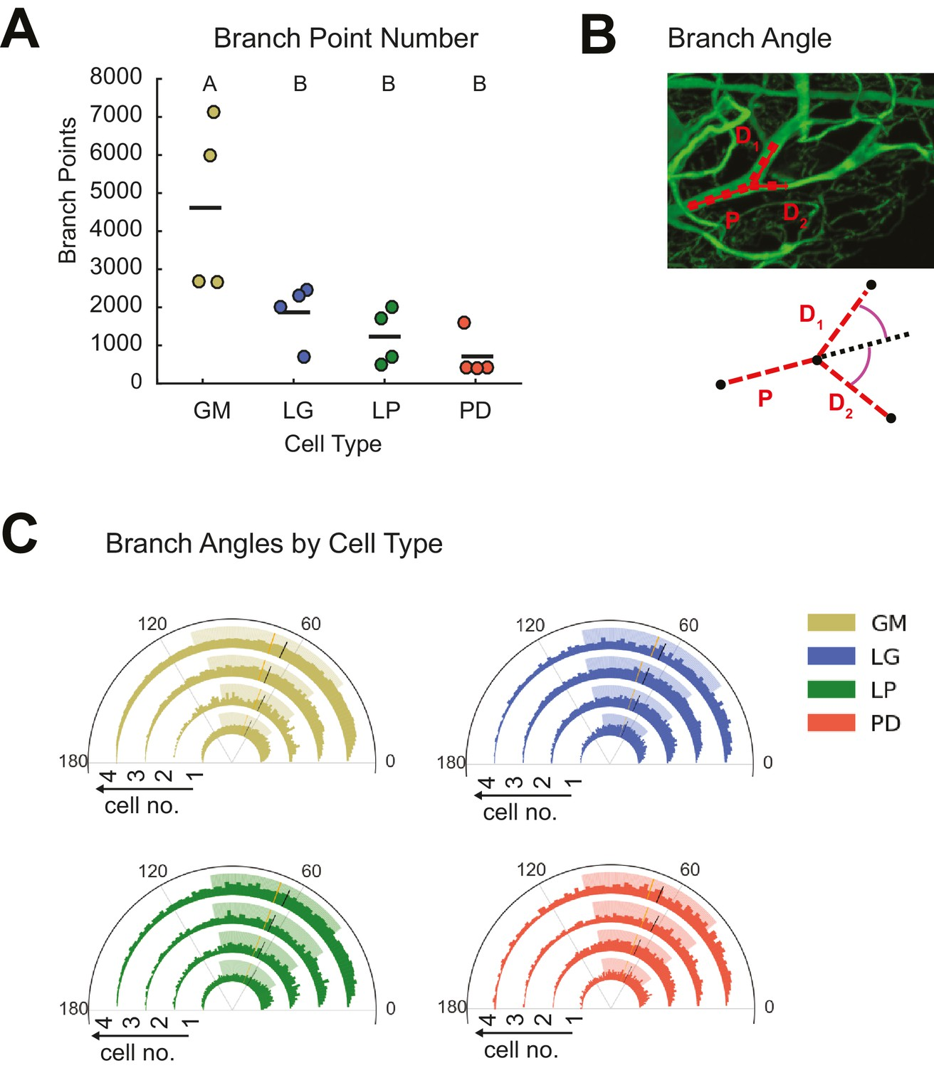 Sloppy Morphological Tuning In Identified Neurons Of The Crustacean 2000 King Road Wiring Diagram Stg Present Variable Branch Point Numbers And Angles