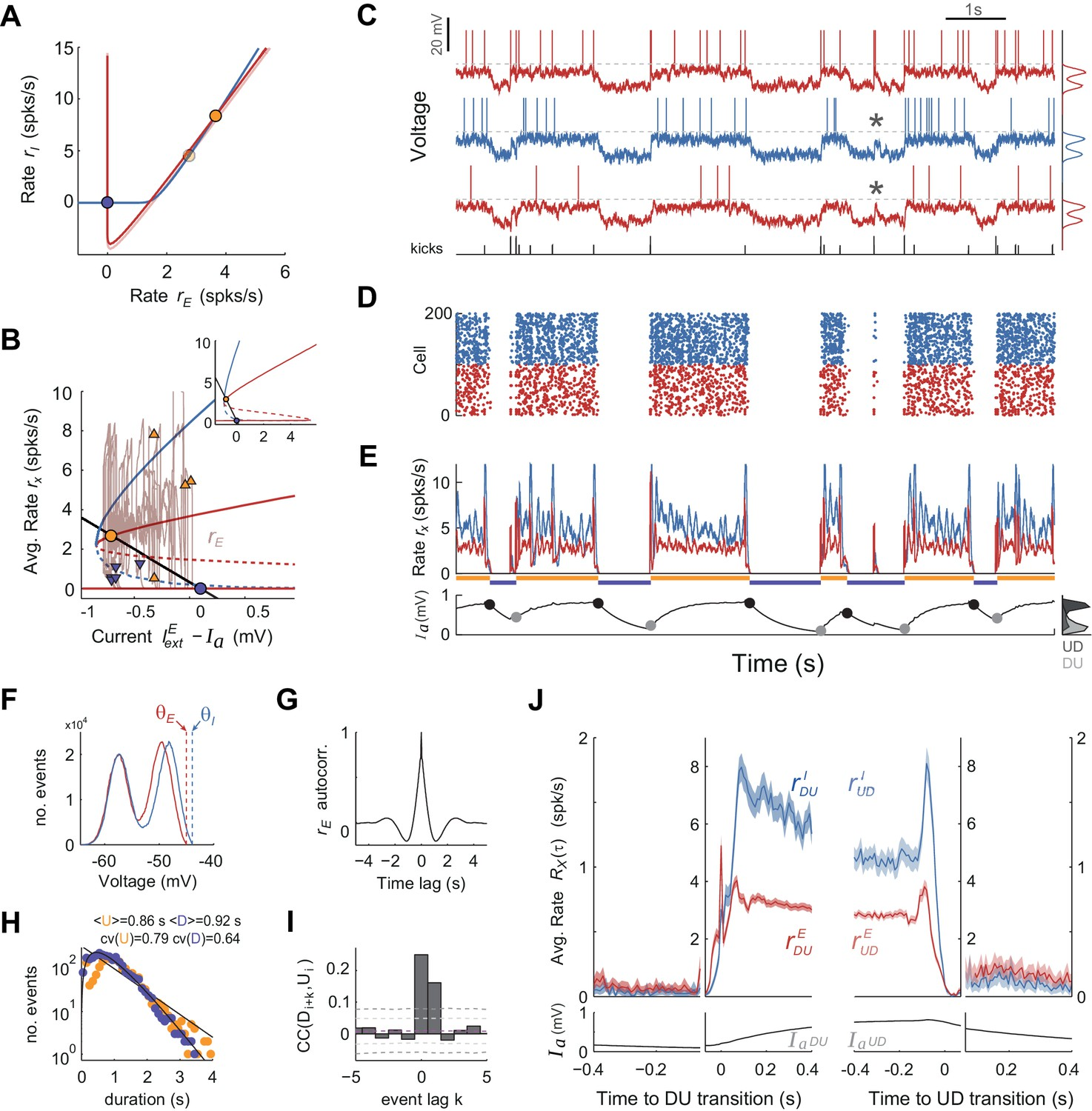 UP-DOWN cortical dynamics reflect state transitions in a bistable